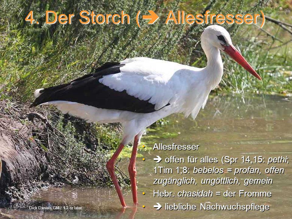 4. Der Storch ( Allesfresser)