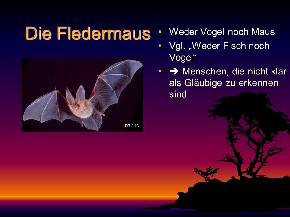 """Die Fledermaus Weder Vogel noch Maus Vgl. """"Weder Fisch noch Vogel"""