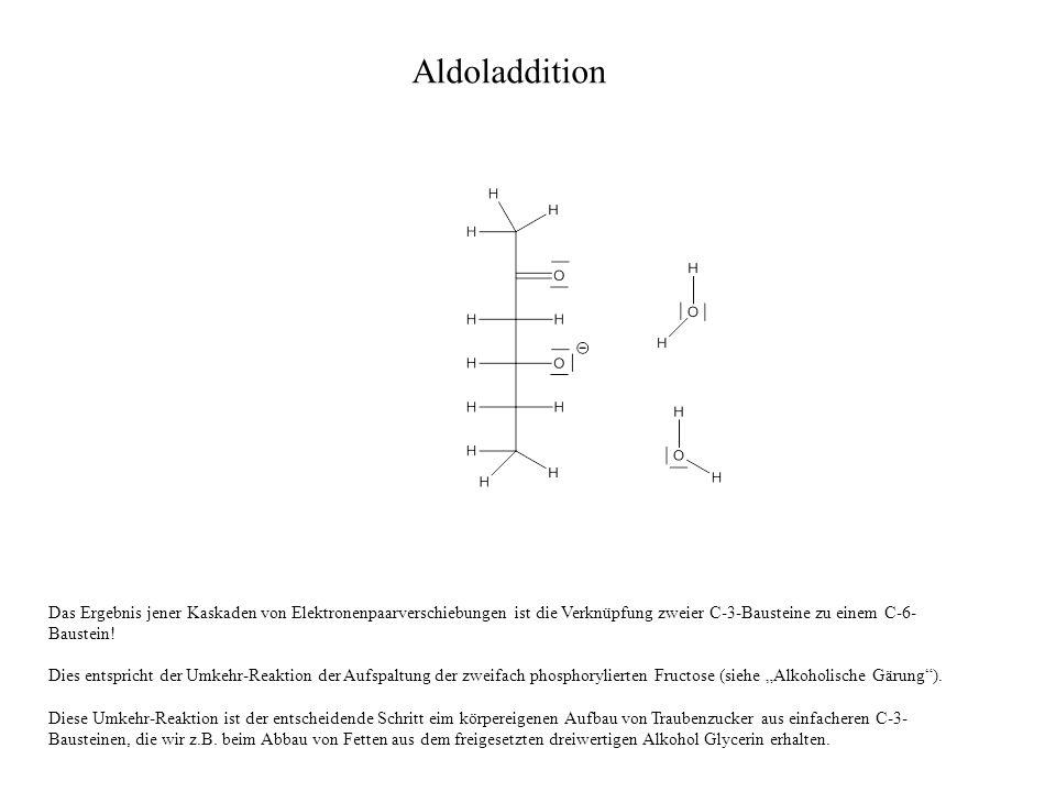 Aldoladdition Das Ergebnis jener Kaskaden von Elektronenpaarverschiebungen ist die Verknüpfung zweier C-3-Bausteine zu einem C-6-Baustein!