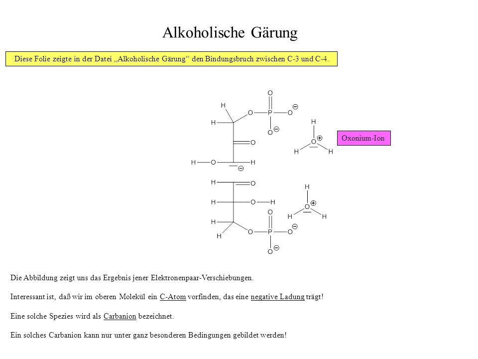 """Alkoholische Gärung Diese Folie zeigte in der Datei """"Alkoholische Gärung den Bindungsbruch zwischen C-3 und C-4."""