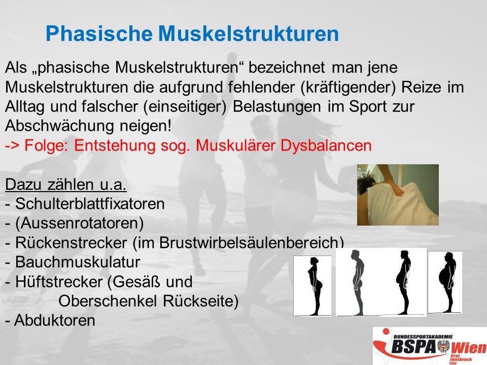 Phasische Muskelstrukturen