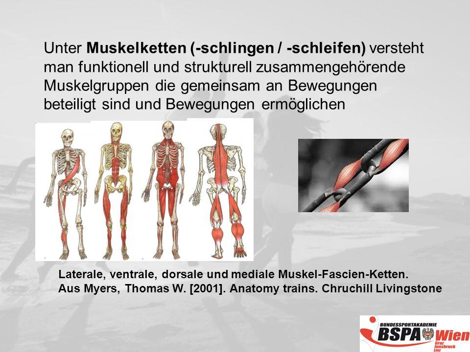 Unter Muskelketten (-schlingen / -schleifen) versteht man funktionell und strukturell zusammengehörende Muskelgruppen die gemeinsam an Bewegungen beteiligt sind und Bewegungen ermöglichen
