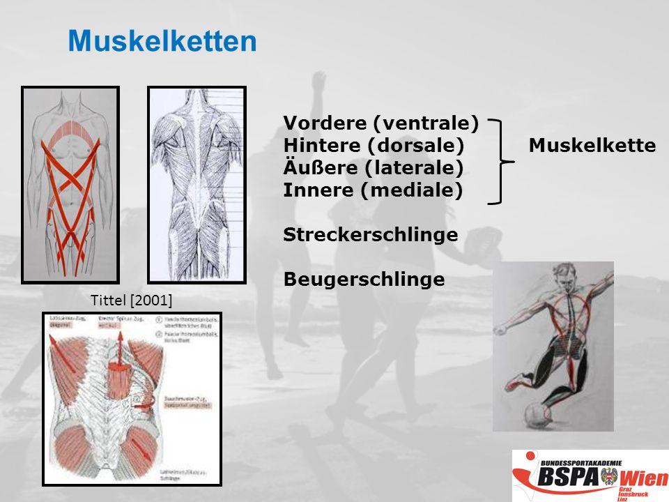 Muskelketten Vordere (ventrale) Hintere (dorsale) Muskelkette