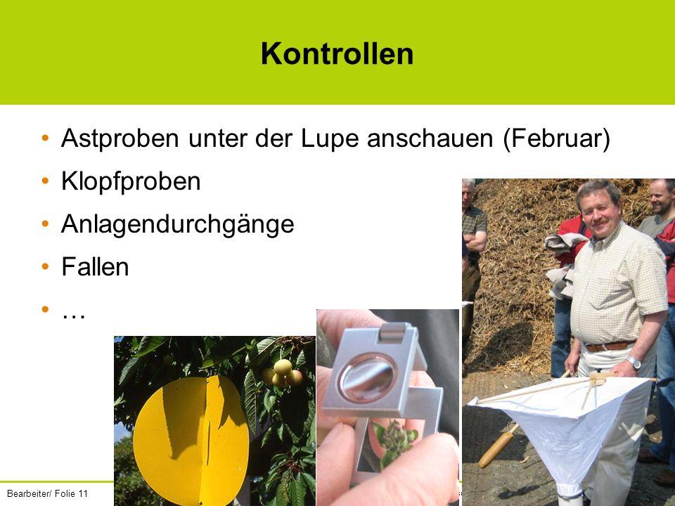 Kontrollen Astproben unter der Lupe anschauen (Februar) Klopfproben