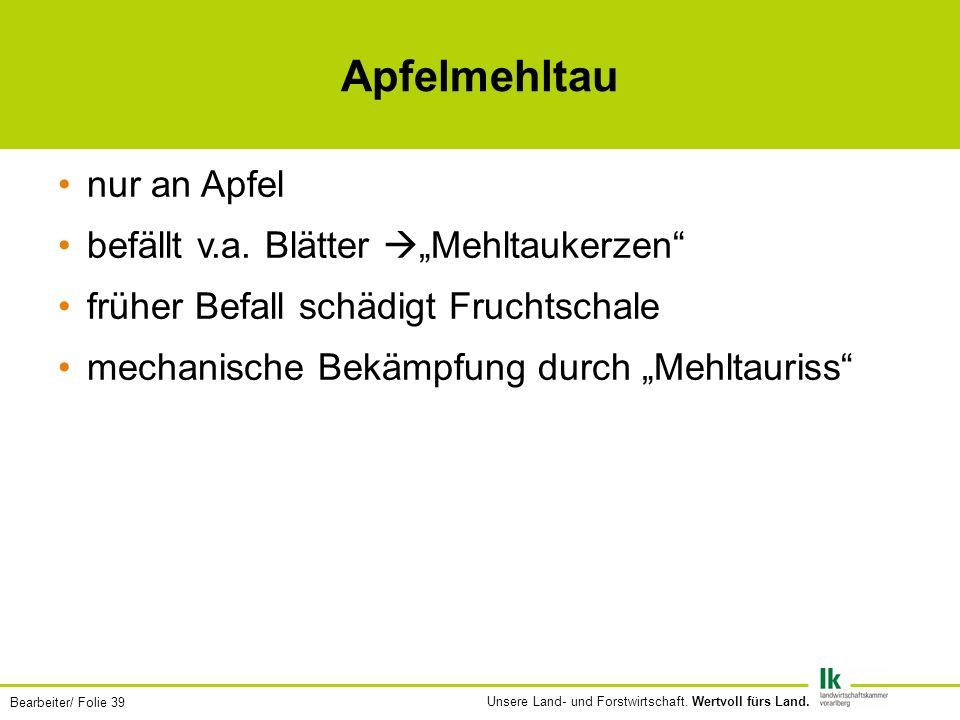 """Apfelmehltau nur an Apfel befällt v.a. Blätter """"Mehltaukerzen"""