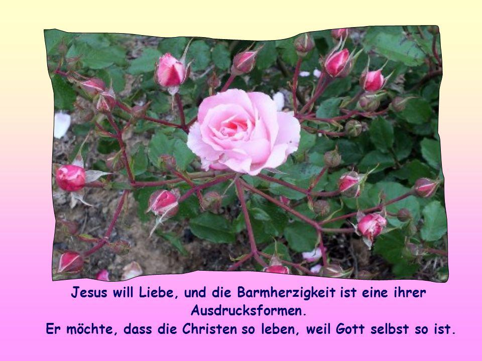 Jesus will Liebe, und die Barmherzigkeit ist eine ihrer