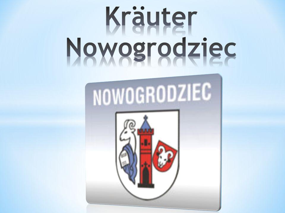 Kräuter Nowogrodziec