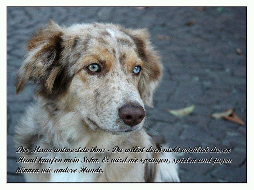 Der Mann antwortete ihm: - Du willst doch nicht wirklich diesen Hund kaufen mein Sohn.