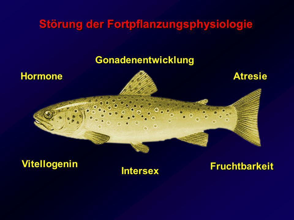 Störung der Fortpflanzungsphysiologie