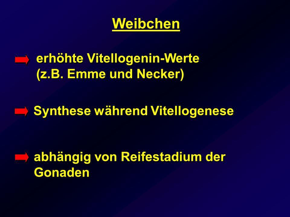 Weibchen erhöhte Vitellogenin-Werte (z.B. Emme und Necker)