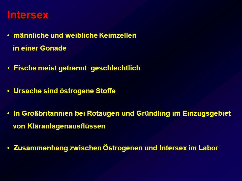 Intersex männliche und weibliche Keimzellen in einer Gonade