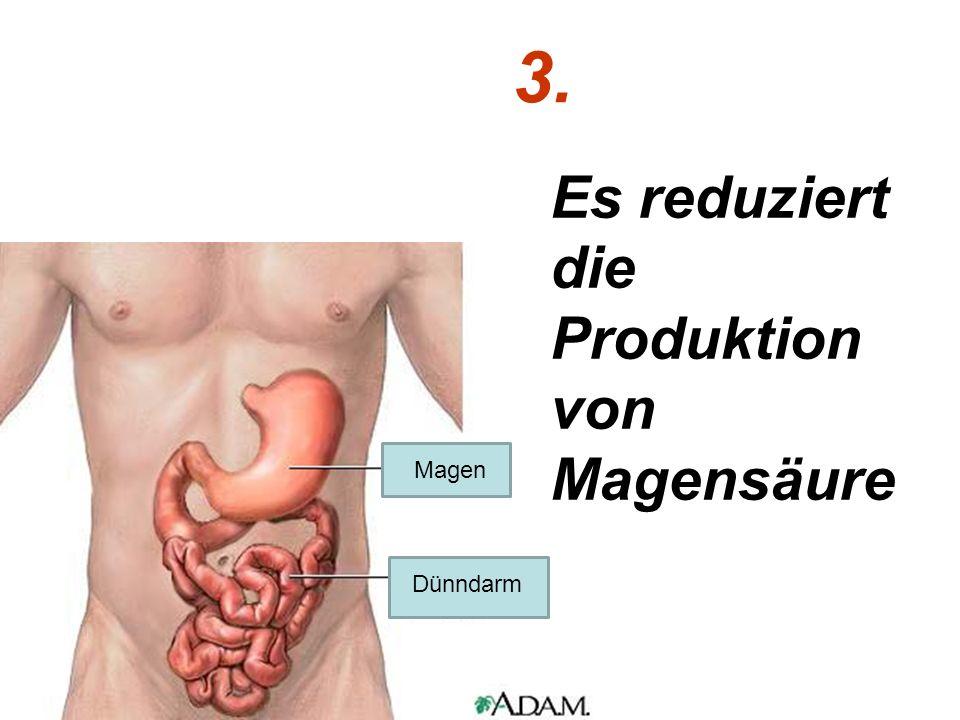 3. Es reduziert die Produktion von Magensäure Magen Dünndarm