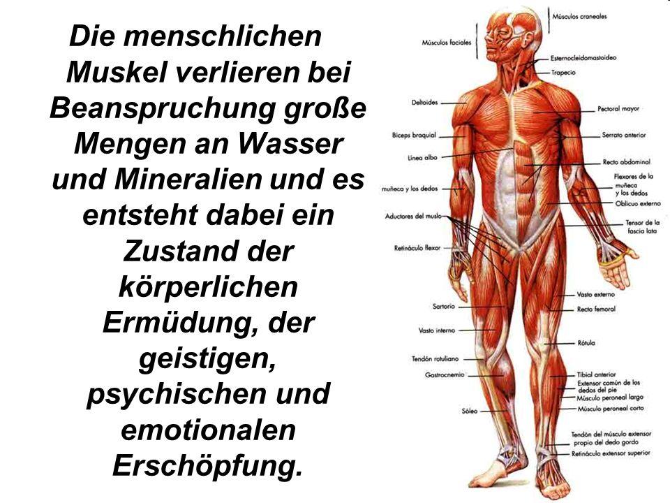 Atemberaubend Große Teile Der Muskulatur Fotos - Menschliche ...