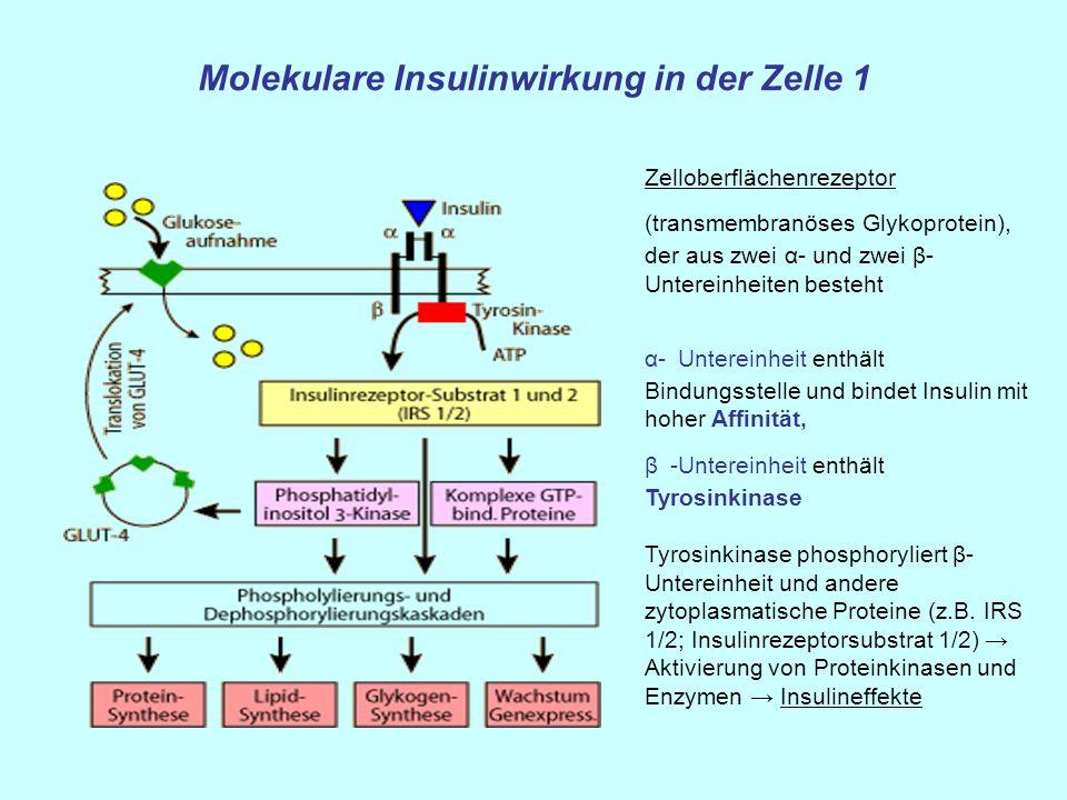 Molekulare Insulinwirkung in der Zelle 1