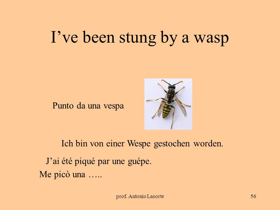 I've been stung by a wasp