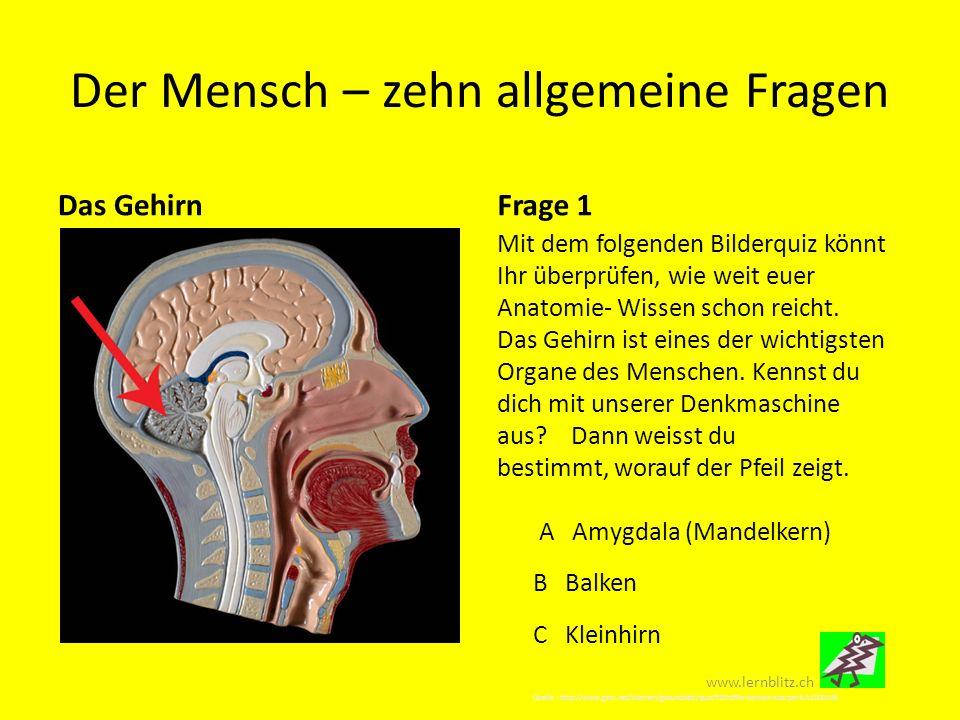 Charmant Anatomie Und Physiologie Frage Bank Galerie - Menschliche ...