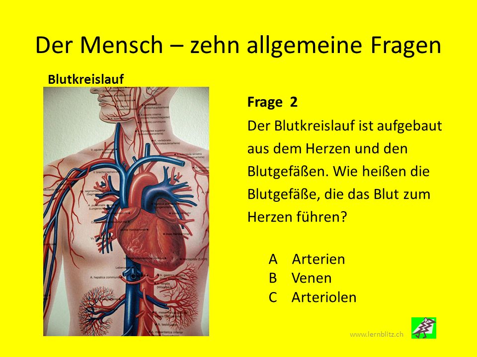 Wunderbar Yoga Anatomie Und Physiologie Pdf Galerie - Menschliche ...