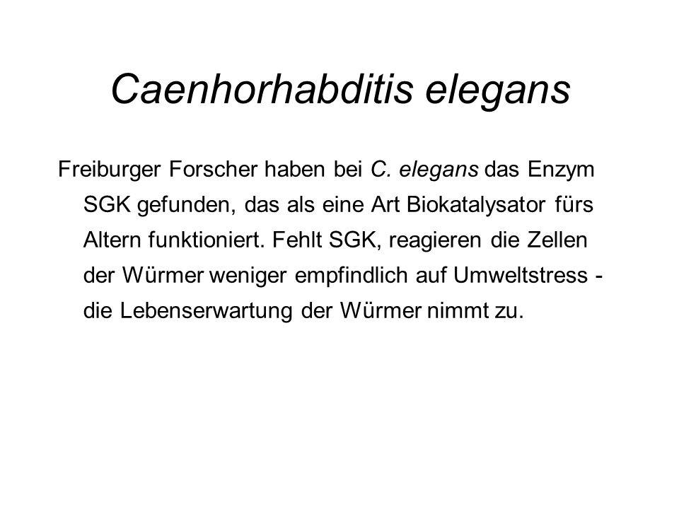 Caenhorhabditis elegans