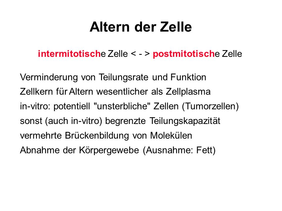 intermitotische Zelle < - > postmitotische Zelle