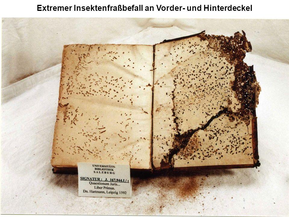 Extremer Insektenfraßbefall an Vorder- und Hinterdeckel