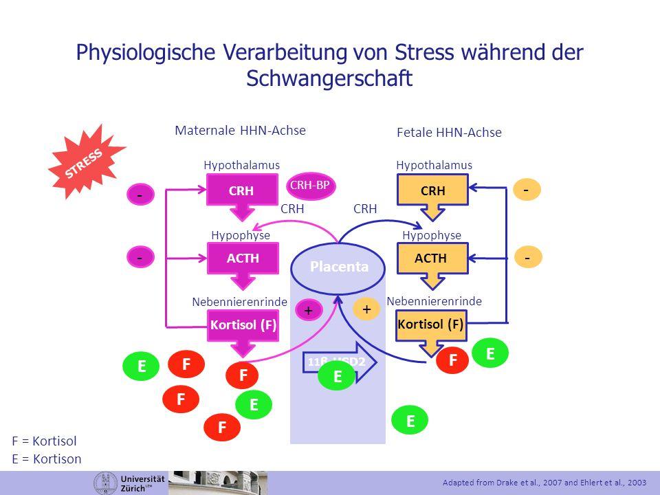Physiologische Verarbeitung von Stress während der Schwangerschaft