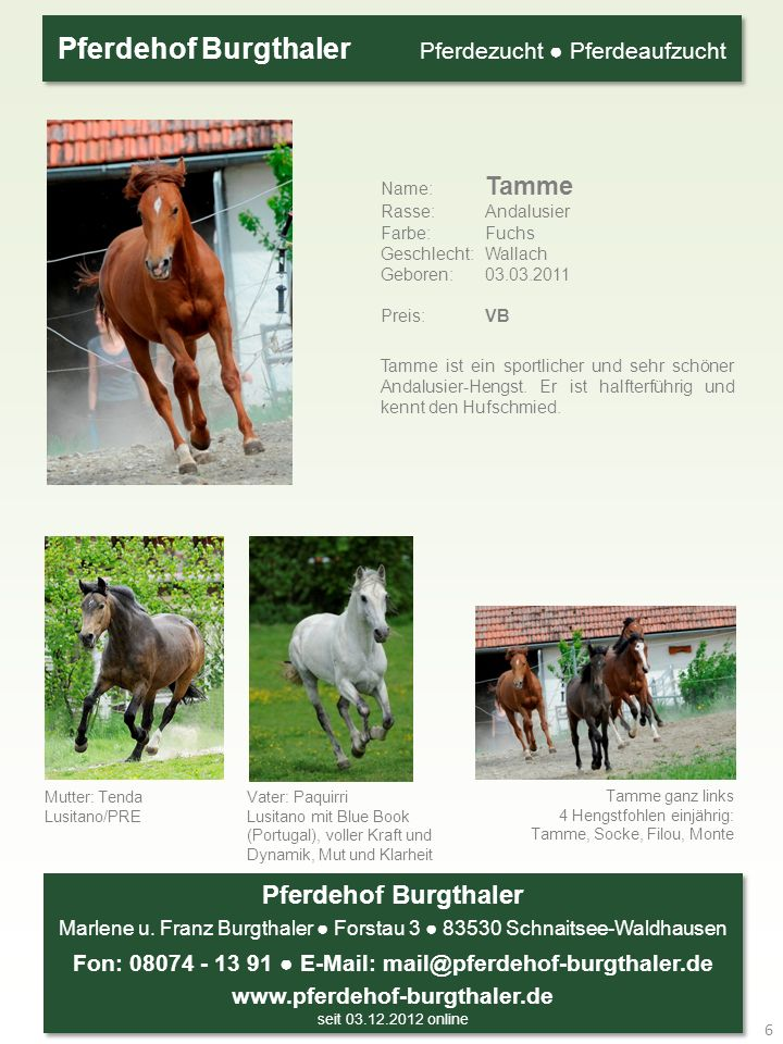 Name: Tamme Rasse: Andalusier Farbe: Fuchs Geschlecht: Wallach