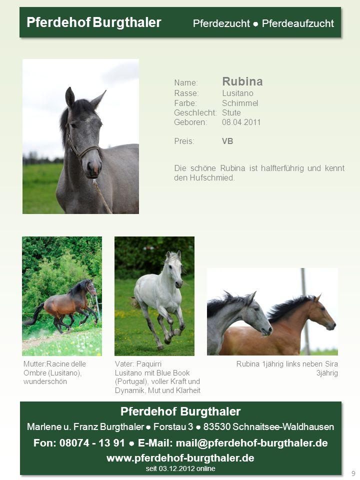 Die schöne Rubina ist halfterführig und kennt den Hufschmied.