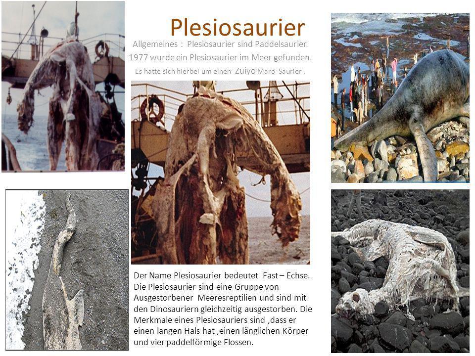 Plesiosaurier Allgemeines : Plesiosaurier sind Paddelsaurier.