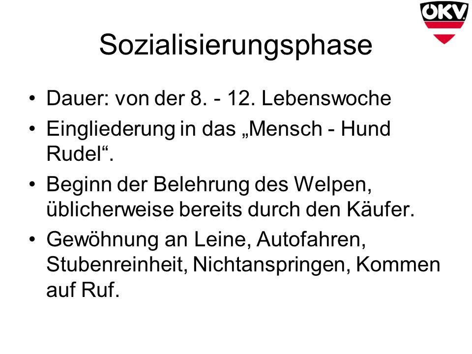 Sozialisierungsphase