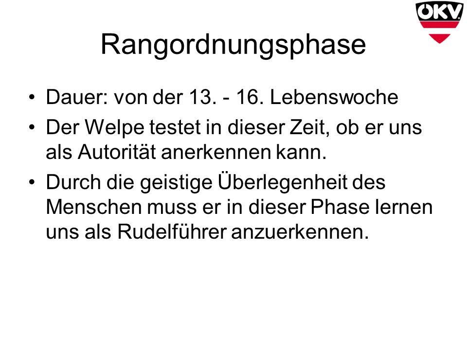Rangordnungsphase Dauer: von der 13. - 16. Lebenswoche