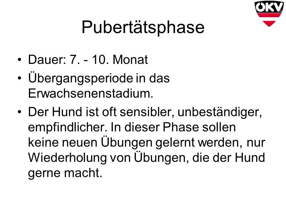 Pubertätsphase Dauer: 7. - 10. Monat