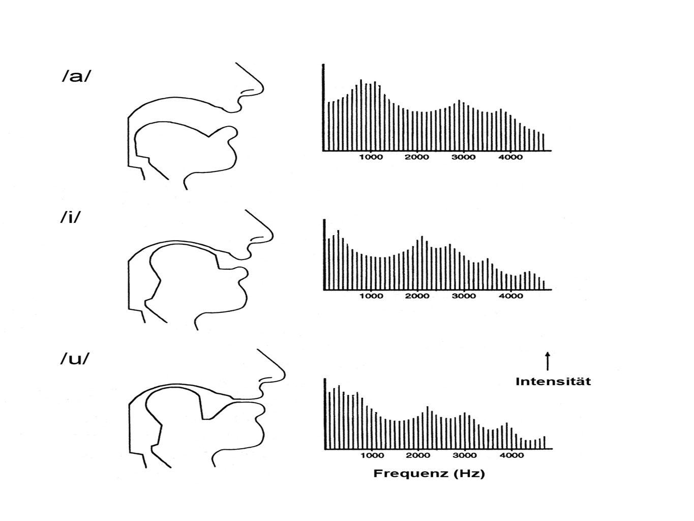 Veränderungen in den Resonanzfrequenzen bewirken, dass unterschiedliche Frequenzbereiche des im Kehlkopf erzeugten Primärschalls verstärkt bzw. abgeschwächt werden. Frequenzbereiche erhöhter Intensität nennt man Formanten.