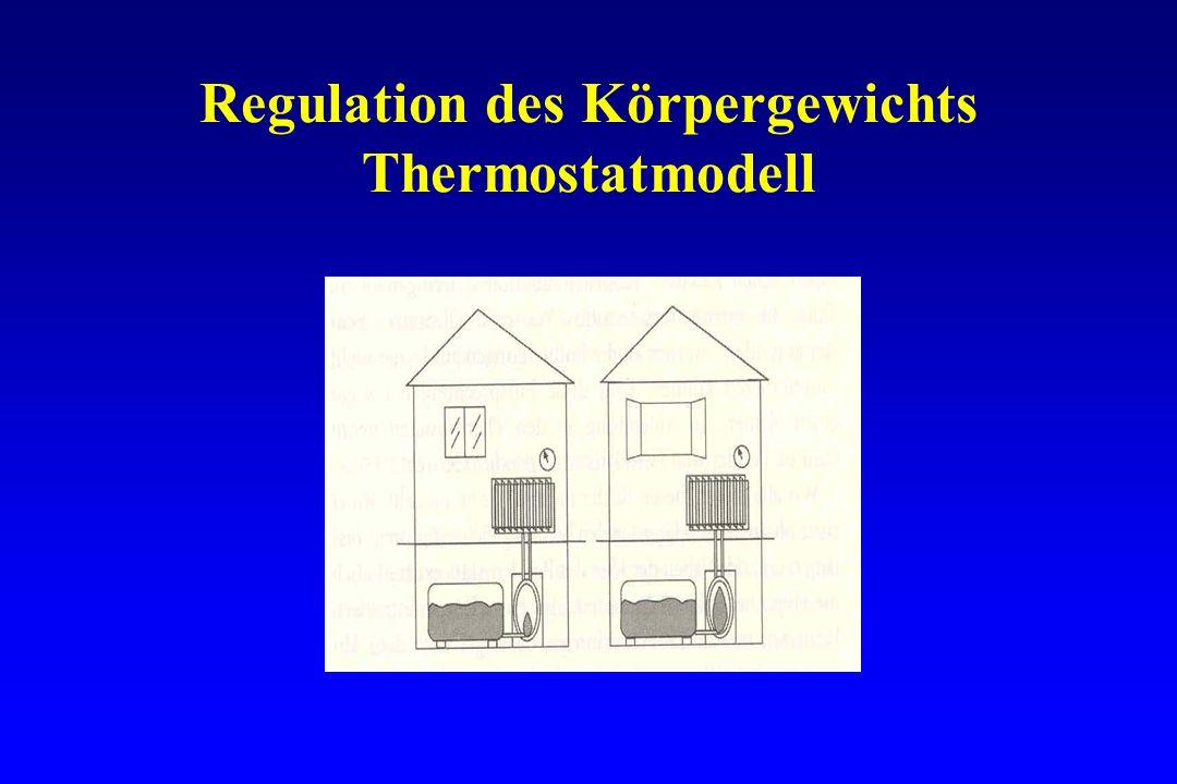 Regulation des Körpergewichts Thermostatmodell