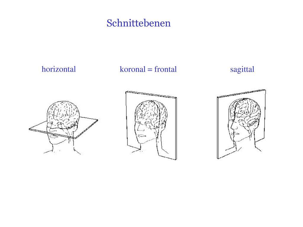 Erfreut Körpersysteme Diagramm Arbeitsblatt Antworten Ideen - Super ...