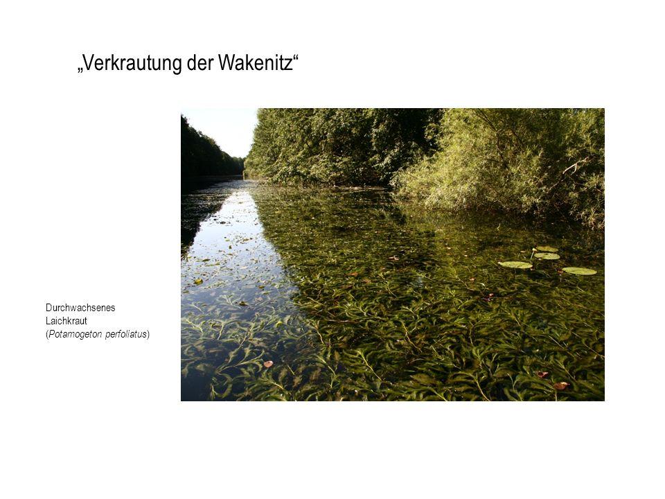 """""""Verkrautung der Wakenitz"""