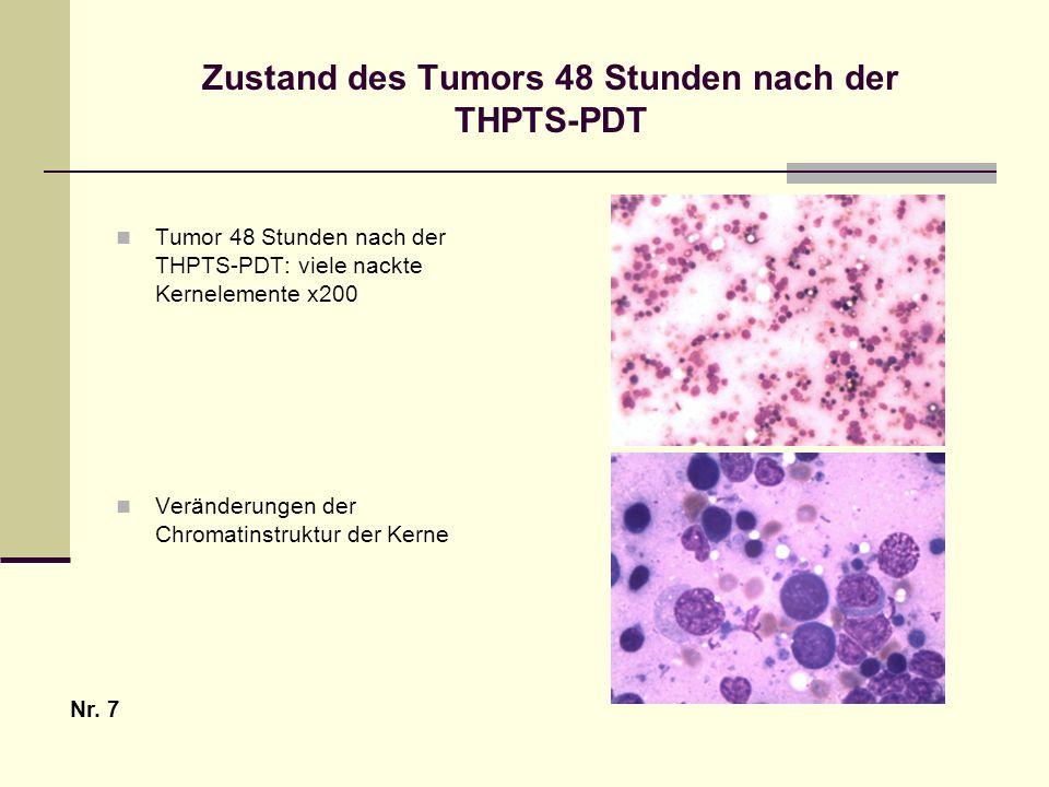 Zustand des Tumors 48 Stunden nach der THPTS-PDT