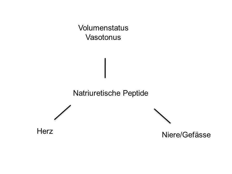 Volumenstatus Vasotonus Natriuretische Peptide Herz Niere/Gefässe