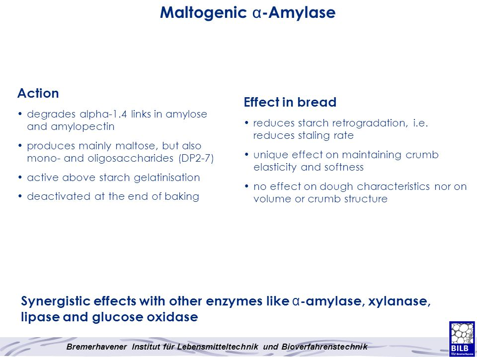 Maltogenic α-Amylase Action Effect in bread