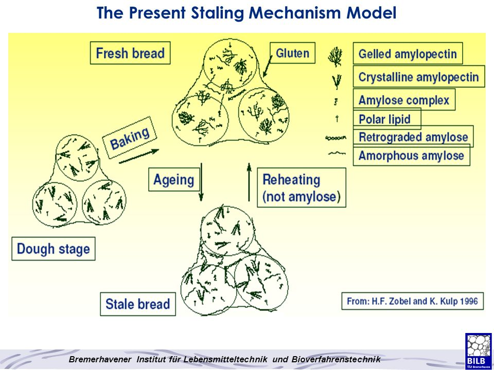 The Present Staling Mechanism Model