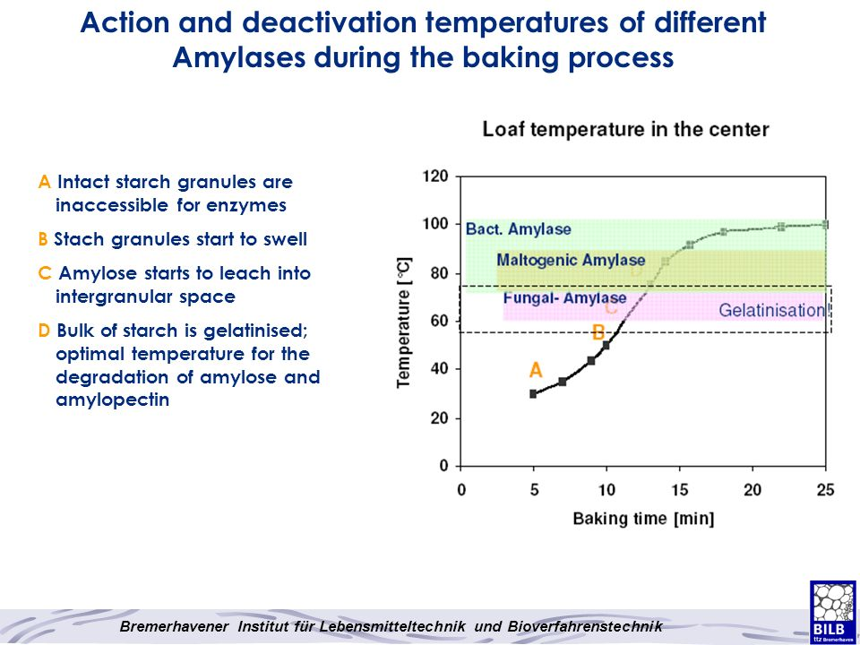Action and deactivation temperatures of different Amylases during the baking process