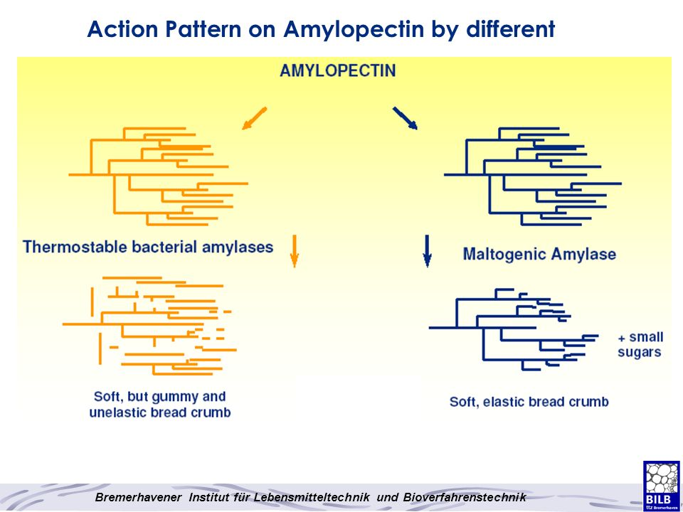 Action Pattern on Amylopectin by different