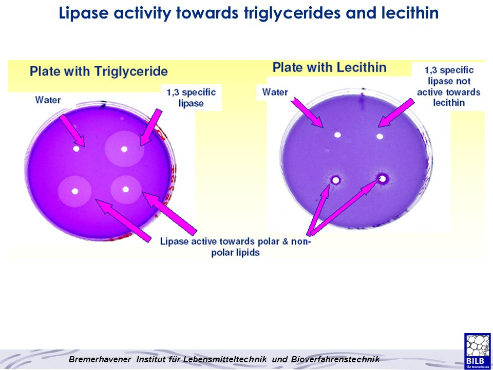 Lipase activity towards triglycerides and lecithin
