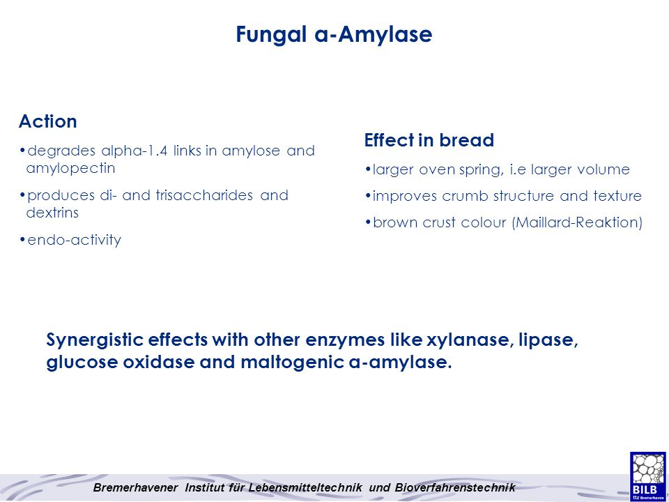 Fungal α-Amylase Action Effect in bread