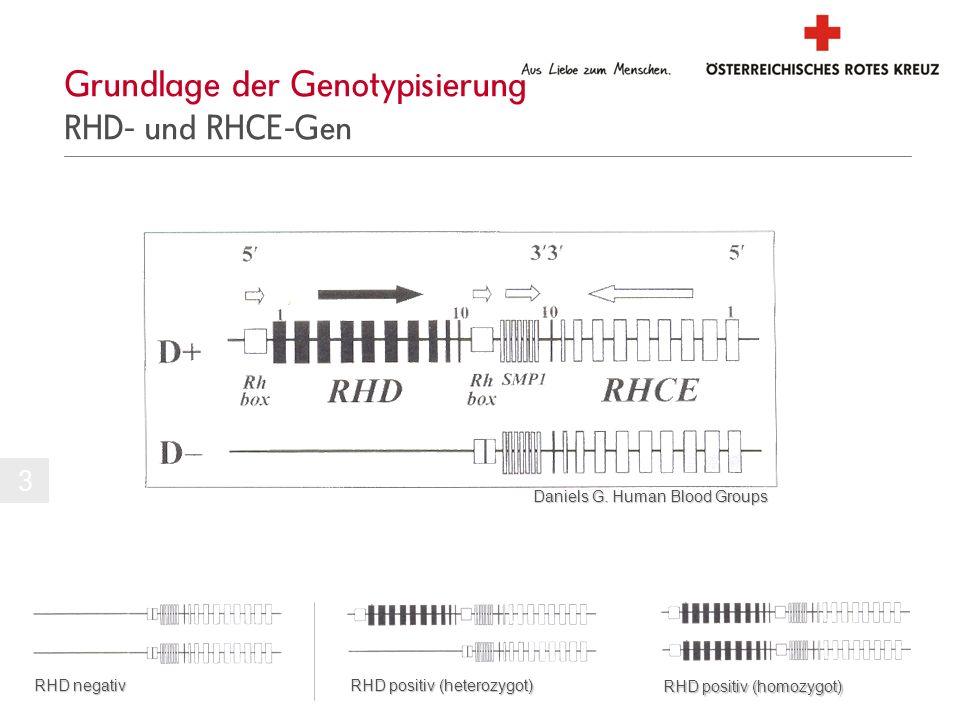 Grundlage der Genotypisierung RHD- und RHCE-Gen