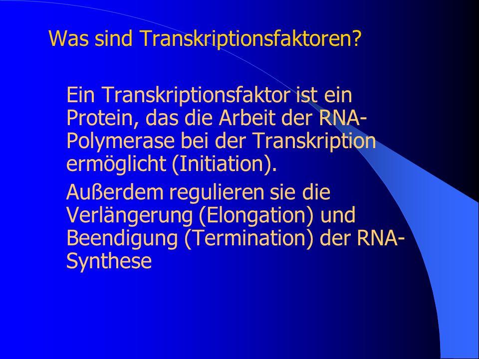 Was sind Transkriptionsfaktoren