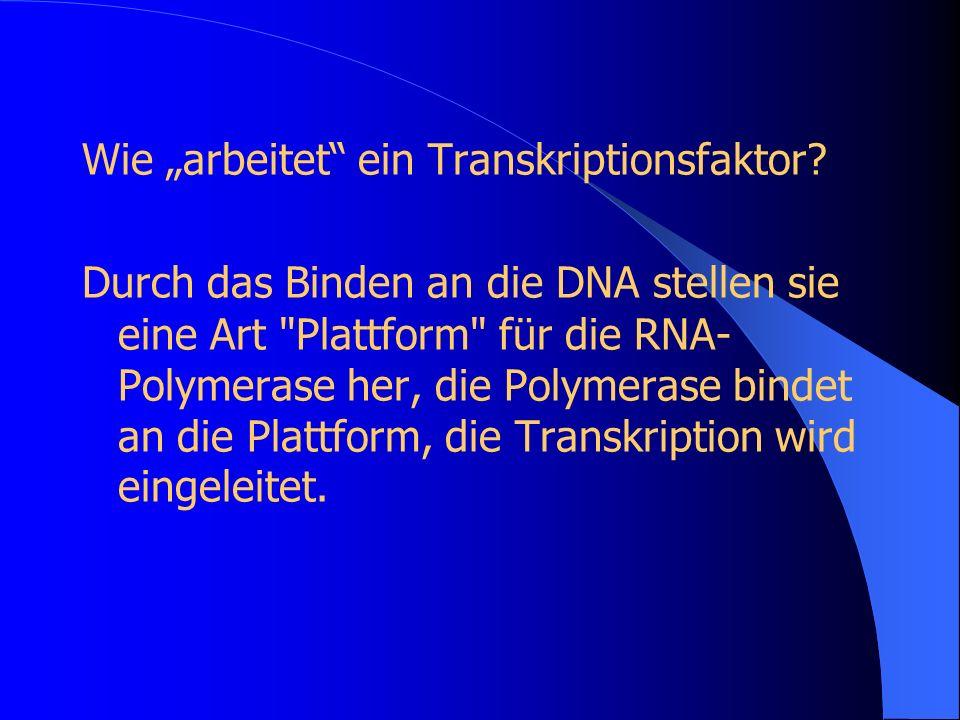 """Wie """"arbeitet ein Transkriptionsfaktor"""