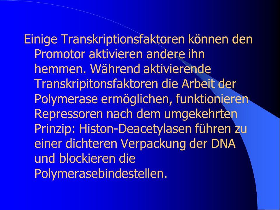 Einige Transkriptionsfaktoren können den Promotor aktivieren andere ihn hemmen.