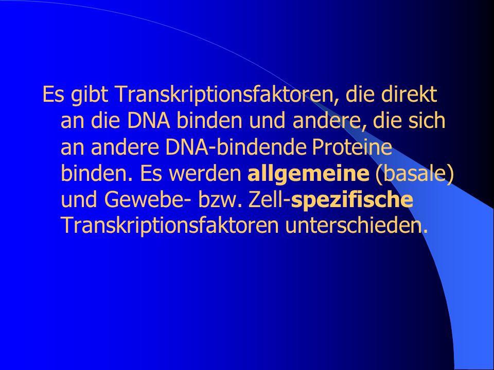 Es gibt Transkriptionsfaktoren, die direkt an die DNA binden und andere, die sich an andere DNA-bindende Proteine binden.