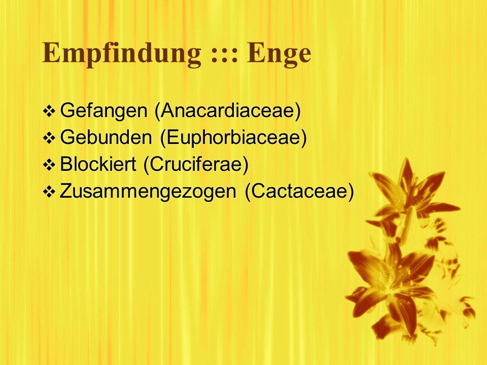 Empfindung ::: Enge Gefangen (Anacardiaceae) Gebunden (Euphorbiaceae)