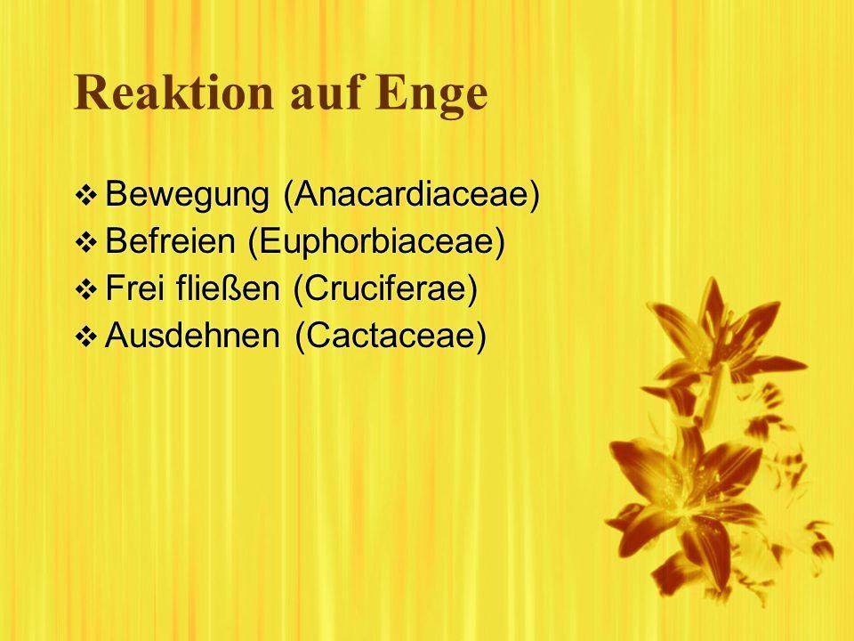 Reaktion auf Enge Bewegung (Anacardiaceae) Befreien (Euphorbiaceae)
